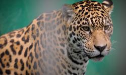 Zoológico do CIGS (Centro de Instrução de Guerra na Selva)