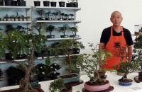 Américas Shopping terá Expo Bonsai entre os dias 24 e 26 de setembro
