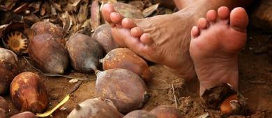 Cajari aumenta valor da produção de amêndoa de babaçu em 5,4%