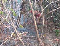 Polícia Civil de Goiás indicia quatro pessoas por incêndios na Chapada