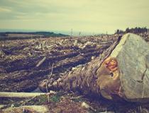 MP ajuíza ação contra proprietários de fazenda em Nova Rosalândia que desmataram reserva legal