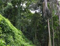 Para 95,4% do setor industrial o licenciamento ambiental é  importante para a preservação do meio ambiente