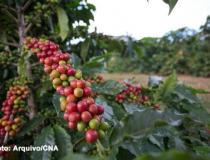 Preço do café sofre queda, nesta sexta-feira (11)