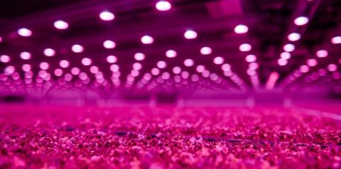 Iluminação LED ajuda fazenda vertical a aumentar a produção de alimentos