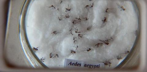 Ministério da Saúde lança campanha de combate ao Aedes aegypti