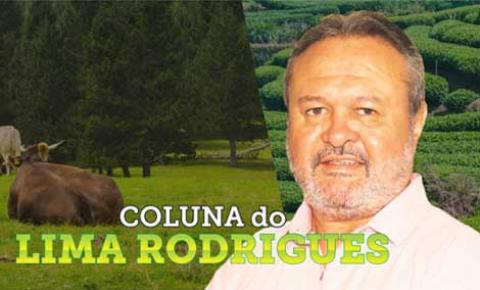Coluna do Lima Rodrigues