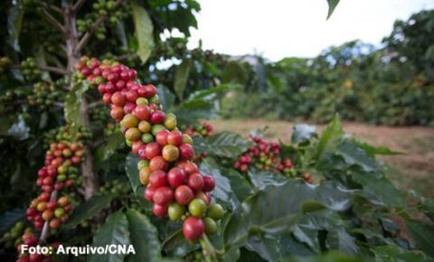 Preços do café e do açúcar em alta. Milho estável, nesta segunda-feira (04)