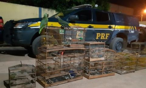 PRF encerra Operação de Combate aos Crimes Ambientais na região de Balsas/MA