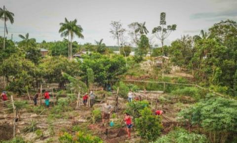 Agroflorestas oferecem oportunidades de mercado para produtores