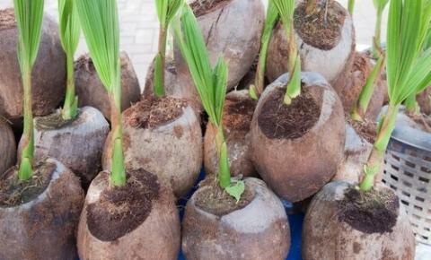 Brasil abre 100 novos mercados de produtos agropecuários