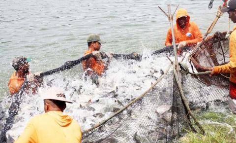 Governo disponibiliza crédito  de R$ 10 milhões para projetos de piscicultura no Tocantins