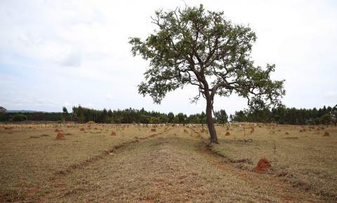 Nova plataforma disponibiliza informações integradas sobre solos
