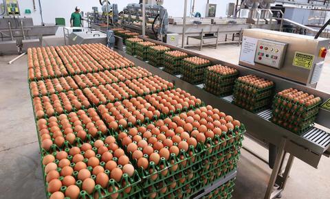 Com alta no preço da carne, ovos têm maior produção em 33 anos