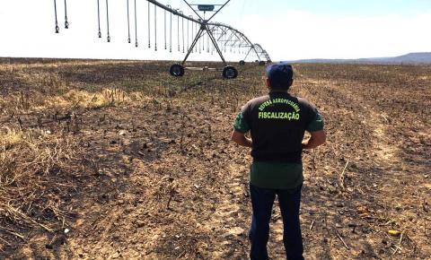 Começou o período do vazio sanitário da soja no Maranhão