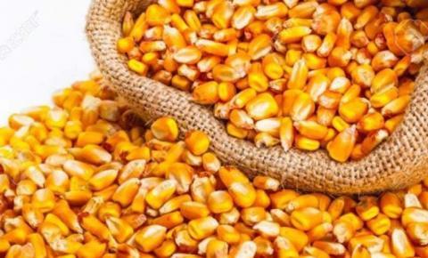 Conab vende mais de 5 mil toneladas de milho pelo ProVB no Maranhão