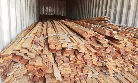 Operação da PF combate desmatamento ilegal na Floresta Amazônica