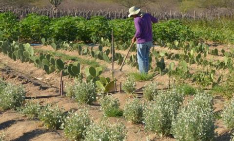 Governo lança programa para agilizar legalização da ocupação de áreas rurais da União