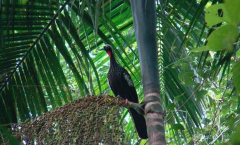 Programa prevê plantio de palmeira-juçara na Mata Atlântica