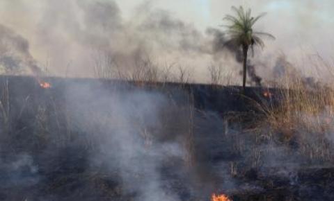 Prefeitura de Araguaína intensifica fiscalização ambiental contra queimadas