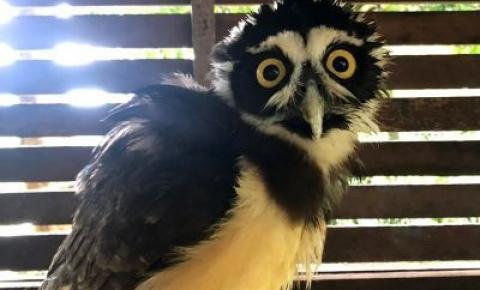 Mangal das Garças oferece aos visitantes a oportunidade de conhecer a coruja Cecília