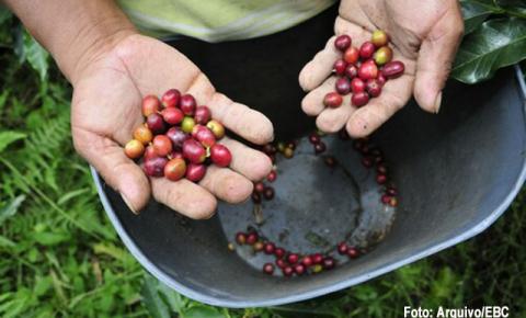 Café inicia a terça-feira (27) com alta no preço