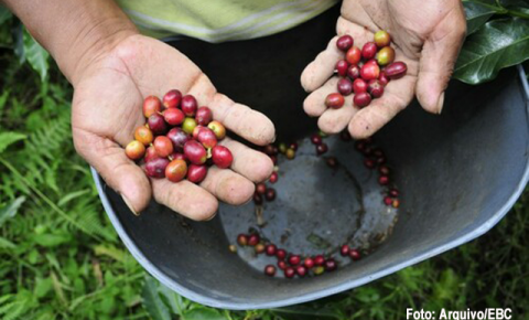 Preços do café, açúcar e milho, em alta nesta quinta-feira (29)